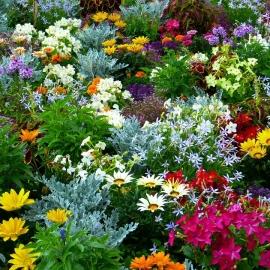 Plantas e Flores Ornamentais
