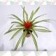 Bromélia guzmania pote 15cm 1ª linha haste simples vermelha